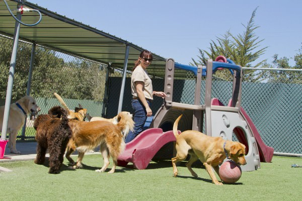 bigstock-Pet-Boarding-46285585