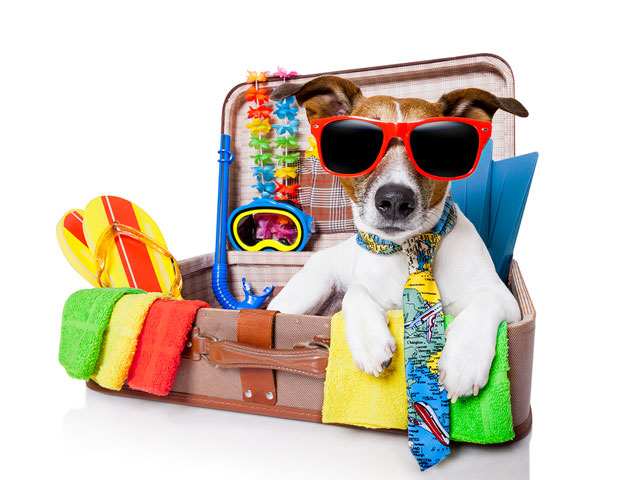 bigstock-Summer-Holiday-Dog-46672231