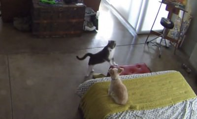 What Happens If A New Cat Isn T Properly Introduced
