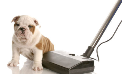 5 Good Reasons To Get A Pet Vacuum Cleaner