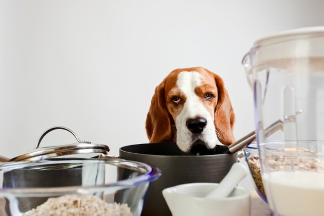 bigstock-Beagle-In-Kitchen-52732831
