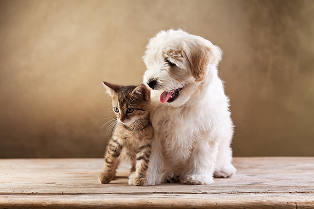 bigstock-Best-friends--kitten-and-smal-41372260