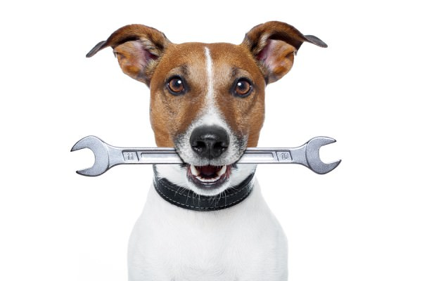 bigstock-Craftsman-Dog-34466165