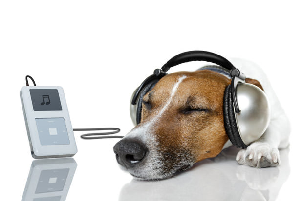 bigstock-Dog-Listen-To-Music-With-A-Mus-33478301