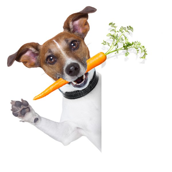 bigstock-Healthy-Dog-With-A-Carrot-51328921