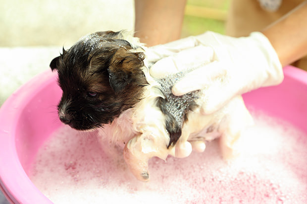 bigstock-Puppy-Dog-In-Bath-Tub-48370145