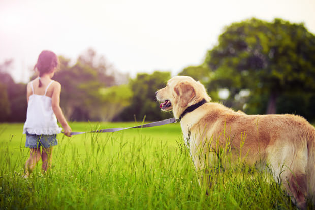 bigstock-Young-girl-with-golden-retriev-19404545