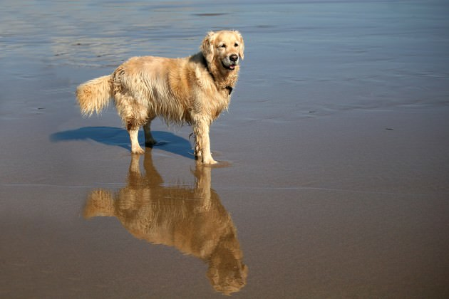 bigstock-dog-on-beach-9570077