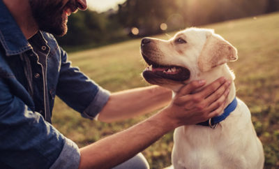 A Beginner Guide To Dog Trackers